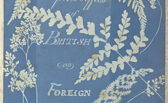 Anna Atkins,Cyanotypes of British and Foreign Ferns, 1853, Cyanotype, 25.4 × 19.4 cm (The J. Paul Getty Museum, Los Angeles)